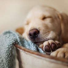 7033688-dog-pet-sleeping
