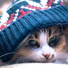 Cat with beenie