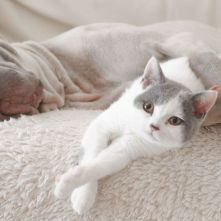 landscape-1438217311-dog-cat-sleeping-together